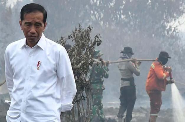 时事评论:如何有效制止印尼园主《烧芭》?